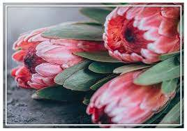 Paint By Numbers - Proteas