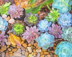 Paint By Numbers - Succulent Bouquet (Pre-Order)
