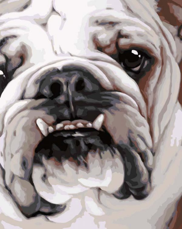 Paint By Numbers - Save our Bullies 2