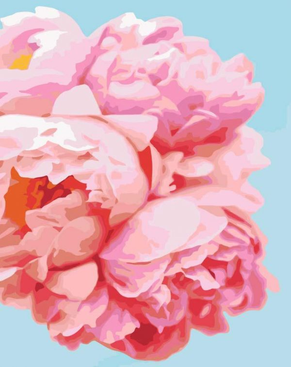 Paint By Numbers - Peony