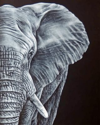 Paint By Numbers - LARGE Tusker (Pre-Order)
